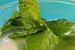Virgin mojito aux concombres